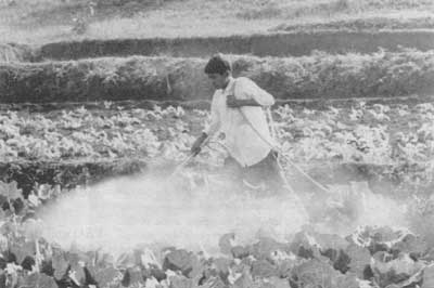 Spraying pesticides in India